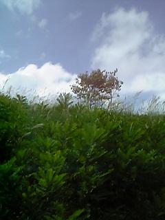 05-09-04_13-00.jpg