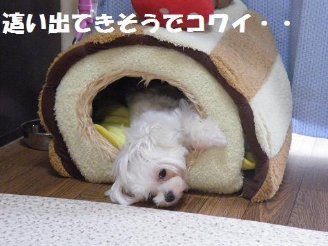 2008_010100001.jpg
