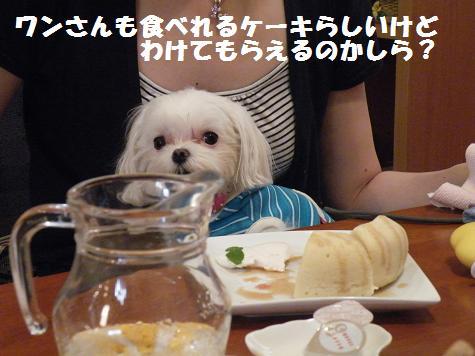2008_082107cocoro0017.jpg