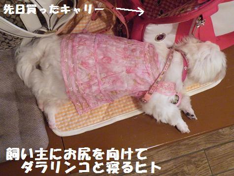 2008_082107cocoro0027.jpg