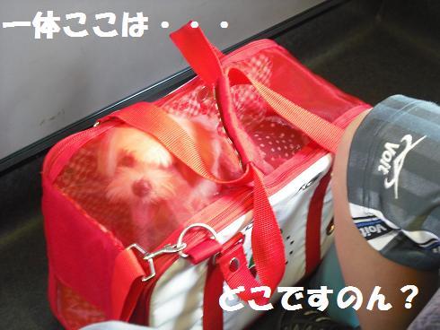 2008_08290004.jpg