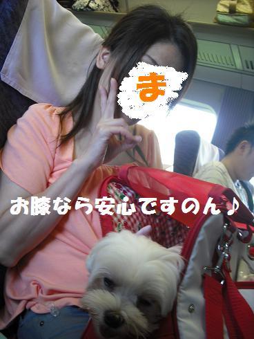 2008_08290009.jpg