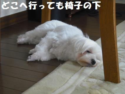 2008_08290040.jpg
