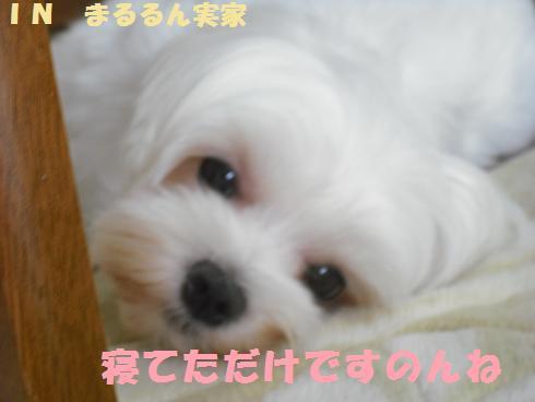 2008_08290041.jpg