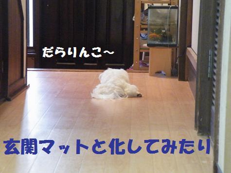 2008_09080012.jpg