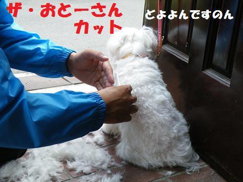 2008_09230002.jpg
