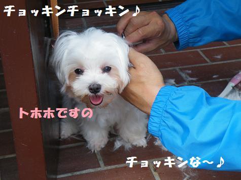 2008_09230005.jpg