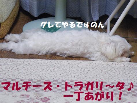 2008_09230010.jpg