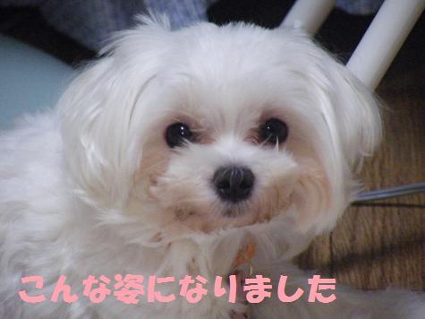 2008_09230012.jpg