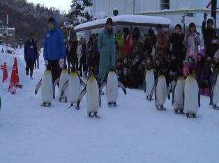 ペンギンパレード (2)