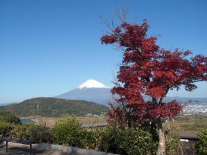 富士山と紅葉のコントラストがきれいです