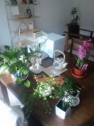 ルームの植物