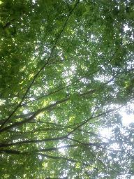 新緑四季の森公園