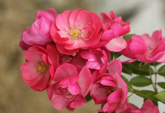 小ぶりな花でもしっかり主張
