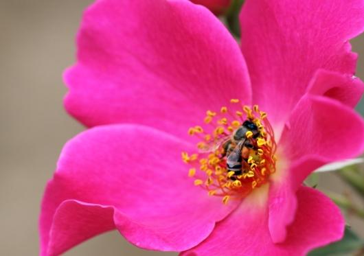 ミツバチも大喜び
