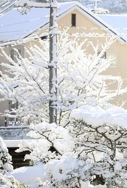 2012.1.26 雪