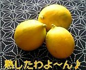 熟したレモン♪♪