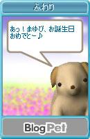 081007blogpet43.jpg