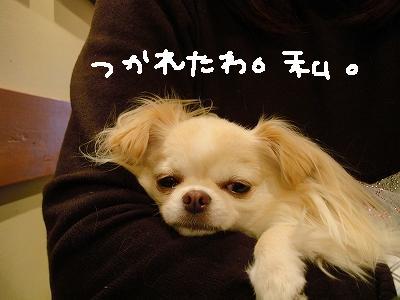 かえるとばぐたみ (14)