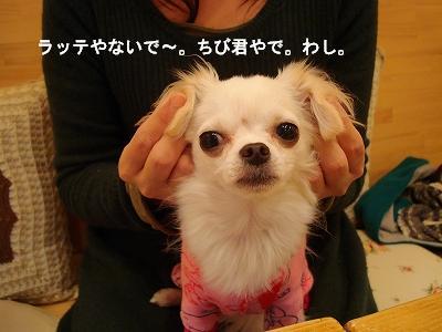 かえるとばぐたみ (28)