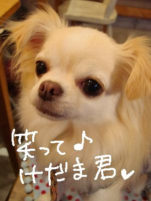 かえるとばぐたみ (39)