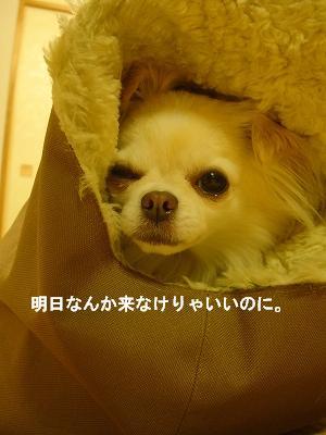 おでかけ (6)