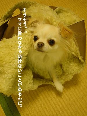 おでかけ (9)