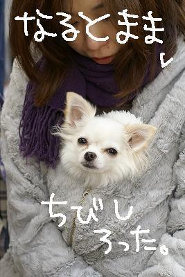 京都・百万遍 (30)