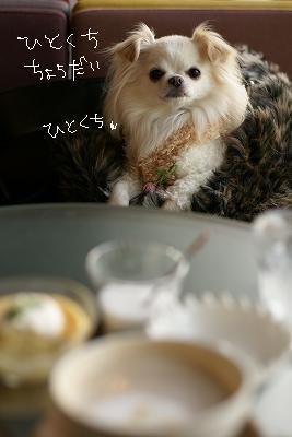 京都・百万遍 (123)