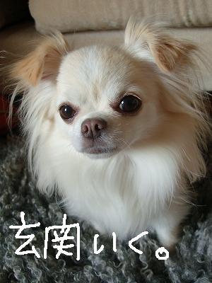 お届けもの (14)