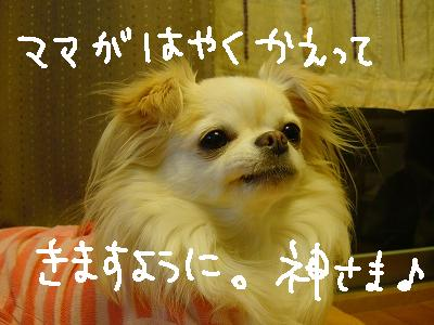 京都・百万遍 (4)