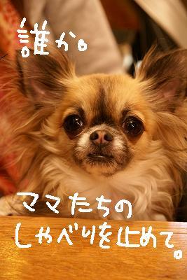 2009-03カエルwマイマイ (86)