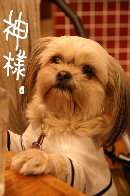 2009-03カエルwマイマイ (87)