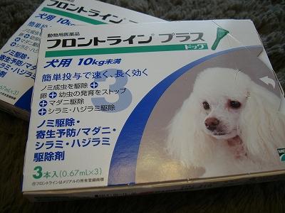 Dairy後半! (2)