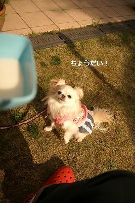 2009-3生駒 (106)