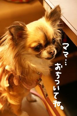 2009-4デリシュー花見 (36)