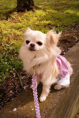 2009-4桜 (18)