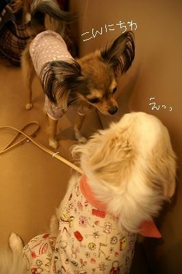 200904デリシュ&MMC (41)
