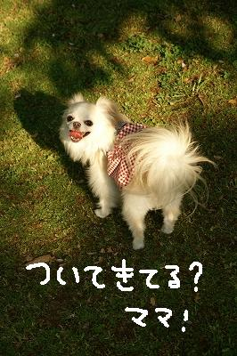 200904宝塚MOBYDICK (80)