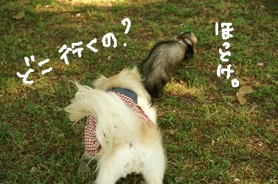 200904宝塚MOBYDICK (84)