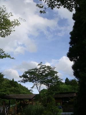 里帰りん (8)