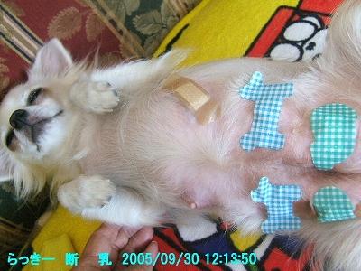 200508ラッテ誕生 (144)