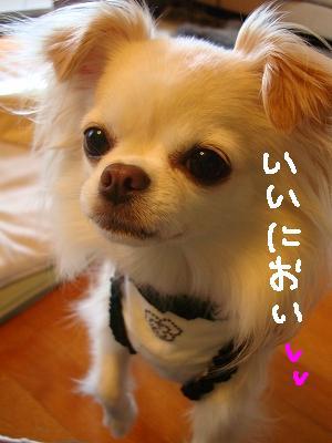 200908ニール箕面 (1)