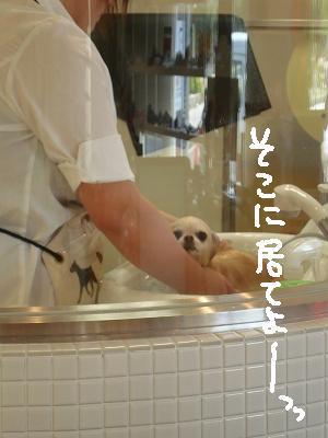 200908ニール箕面 (12)