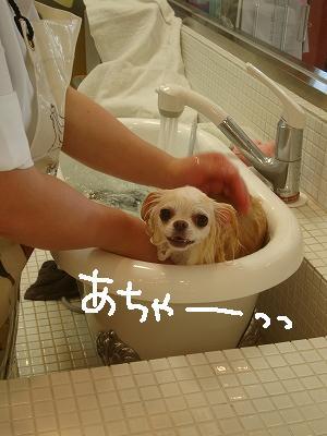 200908ニール箕面 (7)