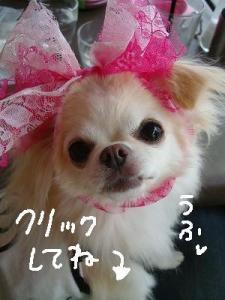 200908ニール箕面 (61)