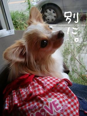 200908ニール箕面 (48)