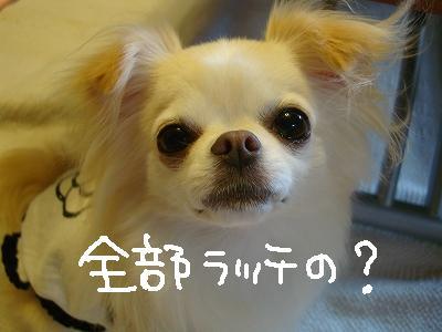 200908ニール箕面 (91)
