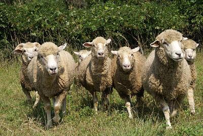 1004-17羊追2