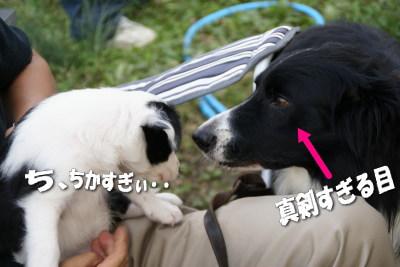 1004-3子犬2